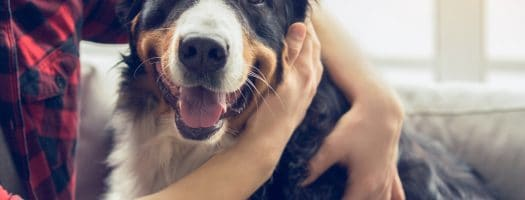 10 Best Dog Breeds to Help People With Anxiety