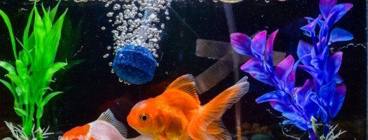 The 10 Best Aquarium Air Stones to Buy in 2021