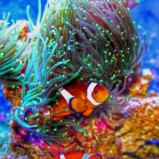 The 10 Best Aquarium Heaters to Buy in 2021