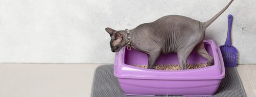 The 10 Best Cat Litter Mats to Buy in 2021