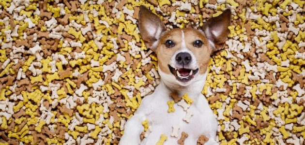 The 8 Best Dog Treats to Buy in 2021