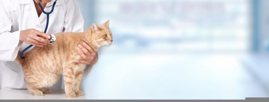 The 10 Best Glucose Meters for Cats in 2021