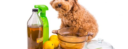 The 12 Best Pet Odor Neutralizers to Buy in 2021