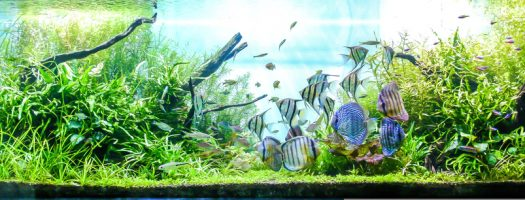 The 9 Best Planted Tank Substrates to Buy in 2021