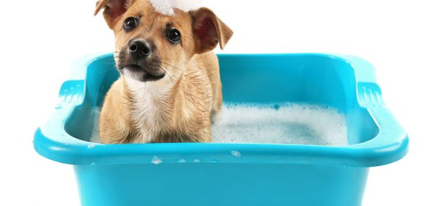 The 10 Best Puppy Shampoos to Buy in 2021
