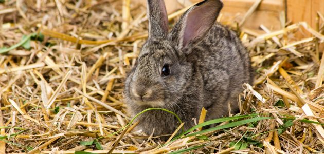 The 8 Best Rabbit Bedding To In, Can Rabbits Have Red Cedar Bedding