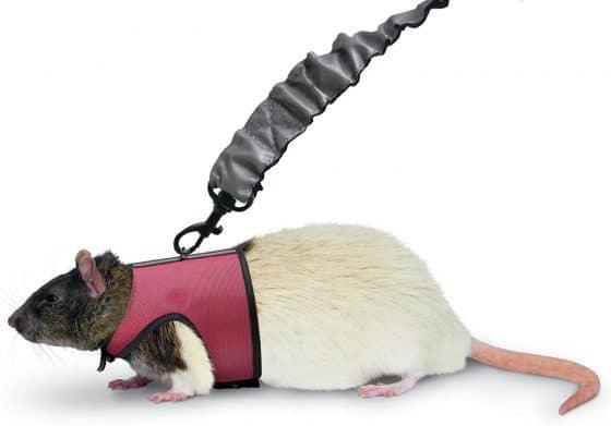Kaytee Comfort Harness & Stretchy Leash