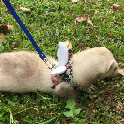 Margelo Ferret Harness and Leash