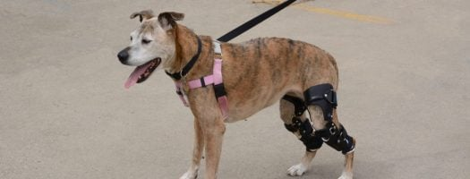 The 10 Best Knee Braces for Dogs in 2021