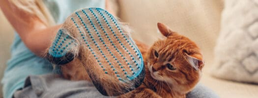 The 10 Best Cat Grooming Gloves to Buy in 2021