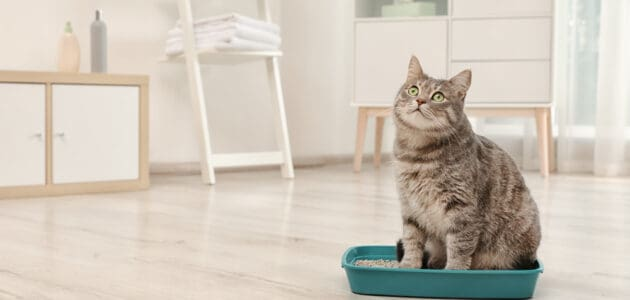 The 10 Best Cat Litter Boxes to Buy in 2021
