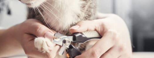 The 10 Best Cat Nail Clippers to Buy in 2021