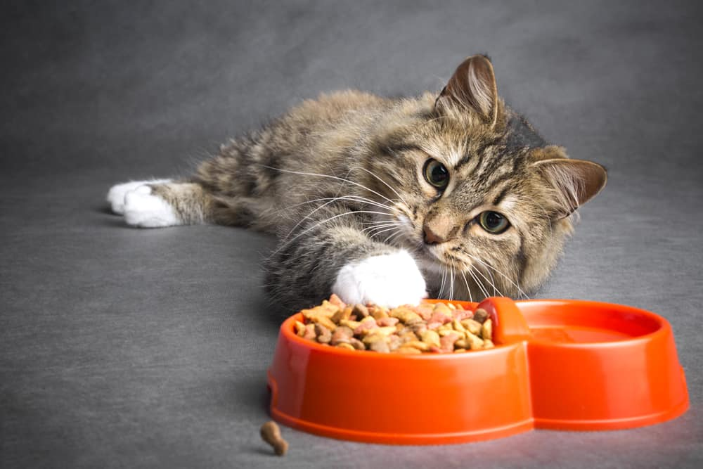 Cat lays on floor with paw in bowl of food