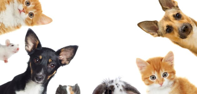 The 8 Best Pet Adoption Websites in 2021