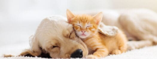 Choosing the Best Dog Breed for Your Cats