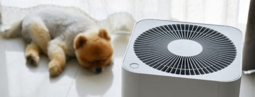 The 10 Best Pet Air Purifiers to Breathe Easy in 2021