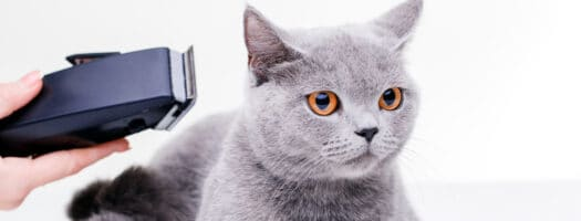 The 8 Best Electric Shavers for Cats in 2021