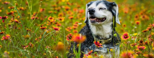 The 10 Best Senior Dog Foods in 2021