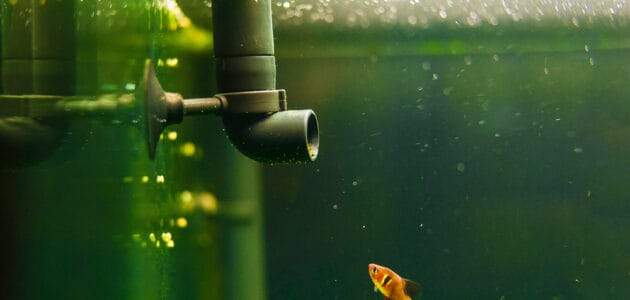 The 10 Best Aquarium Filters to Keep Your Tank Clean in 2021