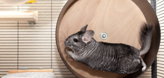 The 10 Best Chinchilla Cages in 2021