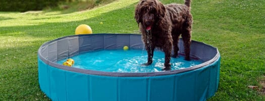 The 10 Best Dog Pools to Keep Your Dog Cool in 2021