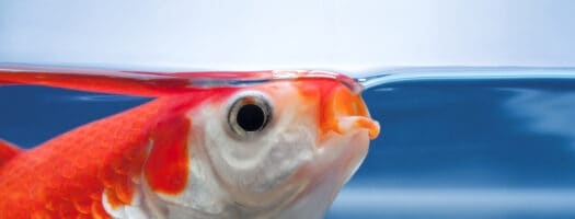 The 10 Best Koi Foods With the Nutrients You Need 2021