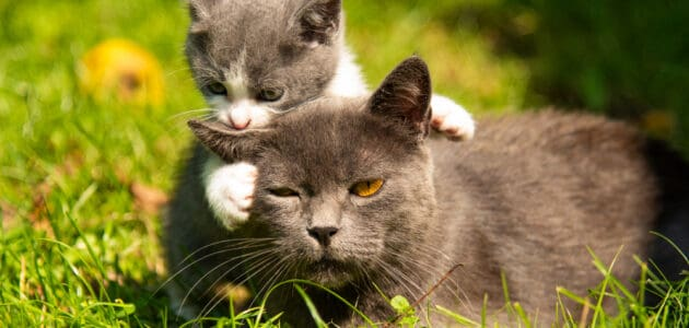 How Big Will My Cat Get? Your Cat's Growth Cycle