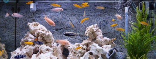 How to Lower Aquarium pH Levels the Safe Way