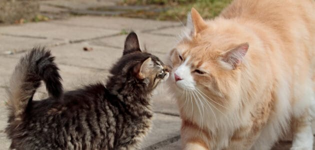 Introducing Your New Kitten to Your Cat