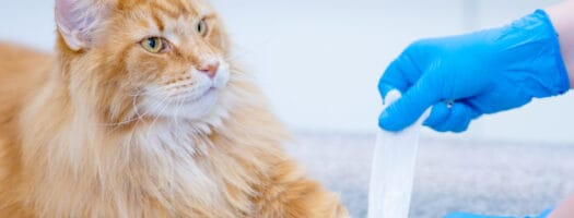 How to Bandage a Cat's Paw: First-Aid for Cats