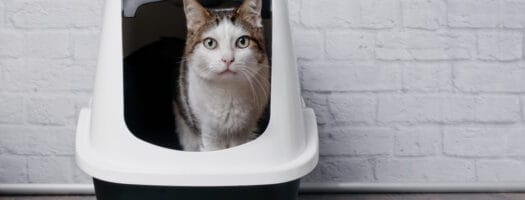 How Often Should Cat Litter Be Changed?