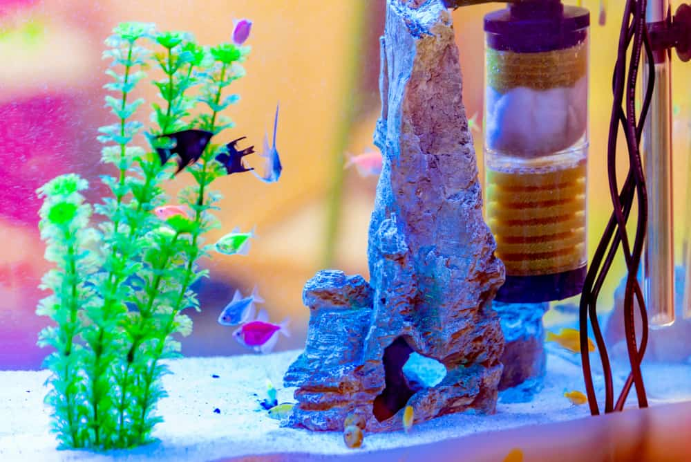 filter in a tank with fish