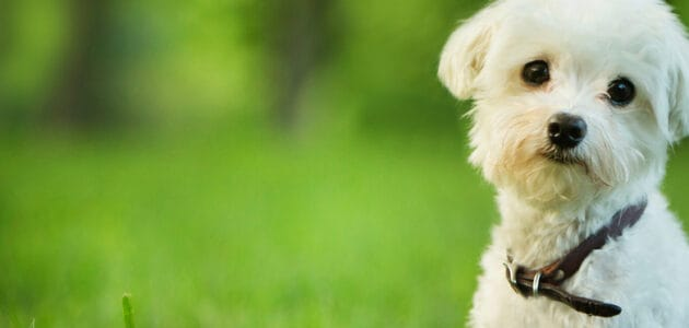 200+ Cute Small Dog Names