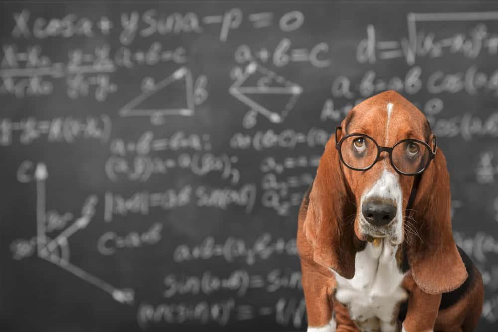 nerdy dog with glasses math chalkboard