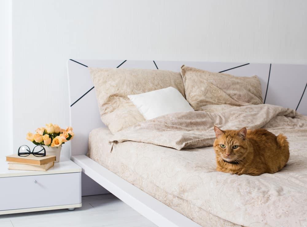 orange cat laying on bed