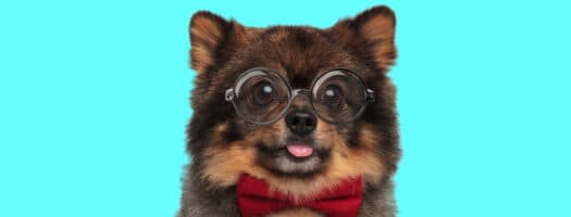 140+ Nerdy Dog Names Every Geek Will Love