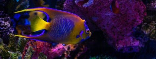 The 10 Best Aquarium UV Sterilizers in 2021