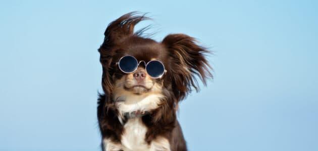 280+ Cool Dog Names