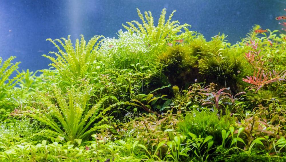 aquarium with bubbles on live plants
