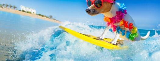 Say Aloha to 100+ Hawaiian Dog Names