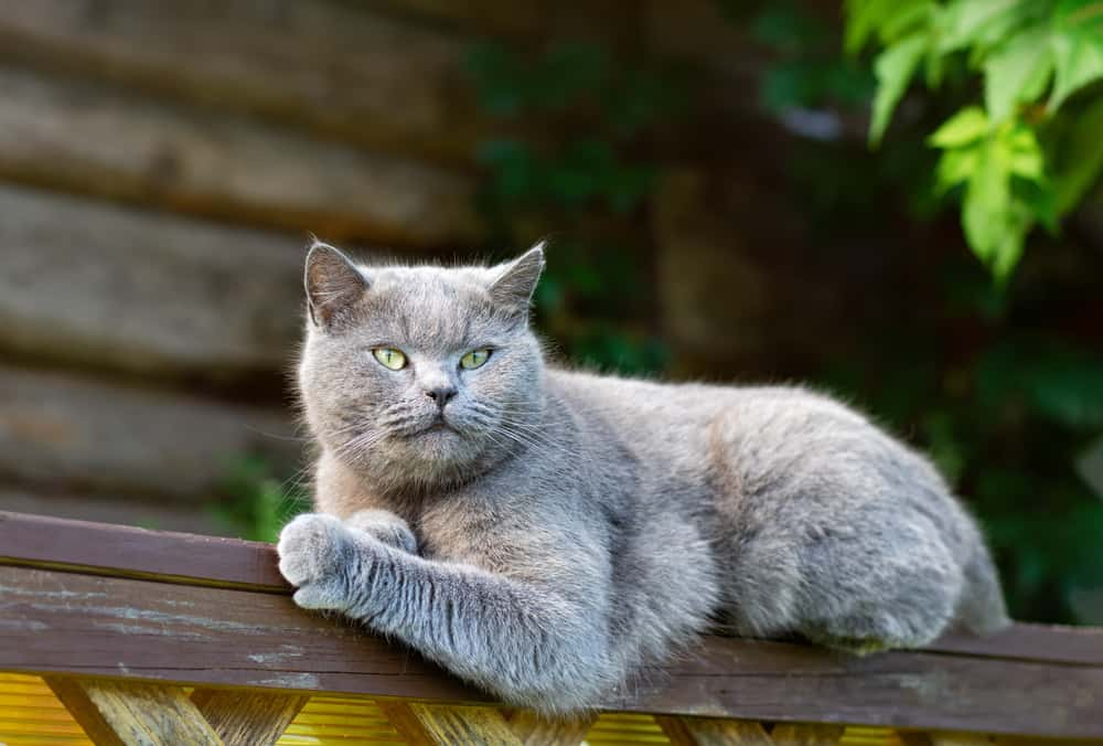 grey cat chilling on fence