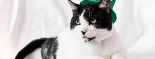 100+ Best Irish Cat Names