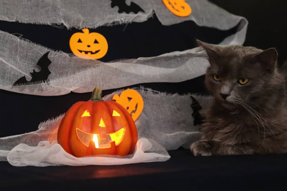 magical grey cat candle lantern