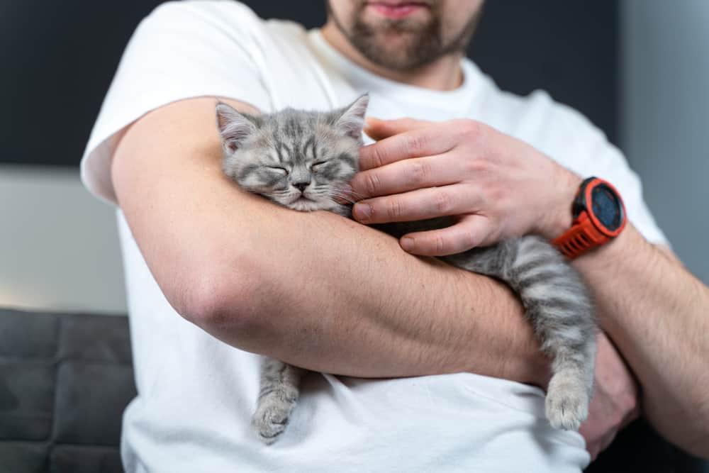 man holding grey kitten