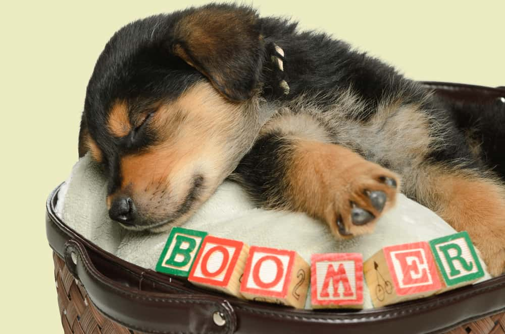 puppy sleeping with blocks spelling boomer