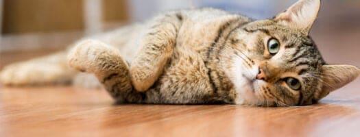 200+ Tabby Cat Names