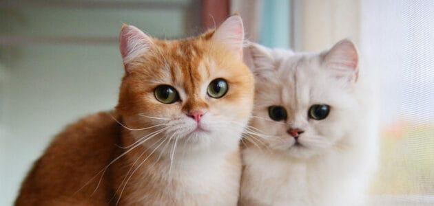 100+ Best Cartoon Cat Names