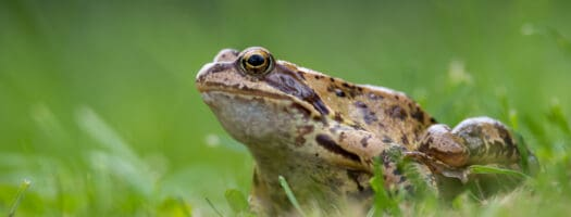 130+ Pet Frog Names That Are Toad-Ally Awesome