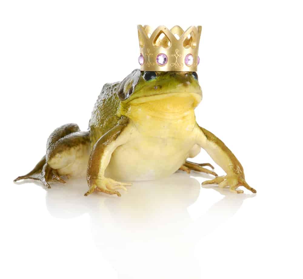 bullfrog wearing crown