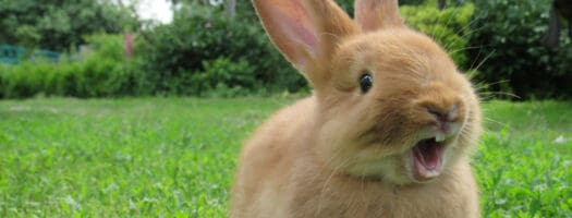 140 Cute Rabbit Names to Make Your Bunny Binky
